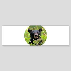Bear Face Bumper Sticker
