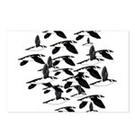 Little Auk Flock Postcards (Package of 8)