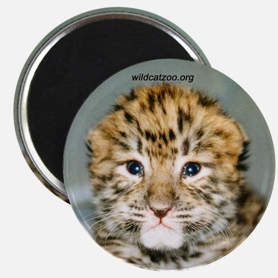 Amur leopard Magnet