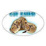 Ball python Single