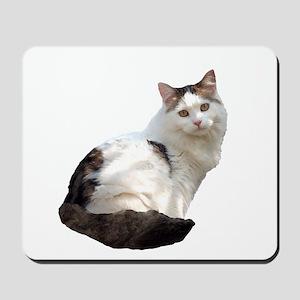 Pretty Kitty Cat Sitting Mousepad