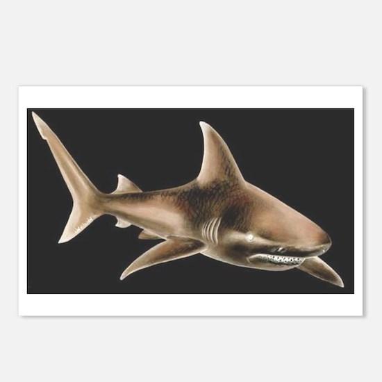 Cute Bull shark Postcards (Package of 8)