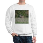 Four Point Buck Sweatshirt