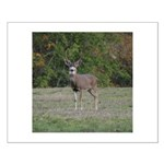 Four Point Buck Small Poster