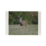 Four Point Buck Rectangle Magnet (100 pack)