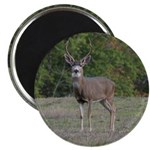Four Point Buck Magnet