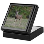 Four Point Buck Keepsake Box