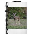 Four Point Buck Journal