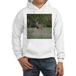 Four Point Buck Hooded Sweatshirt