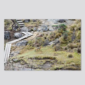 Cajas low land wolf Postcards (Package of 8)