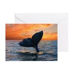 WHALE DREAMS Greeting Cards (Pk of 10)