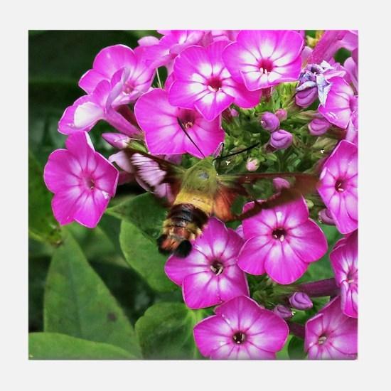 Humming moth on phlox Tile Coaster