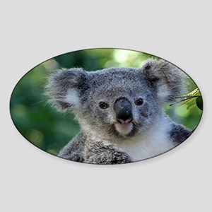 Cute cuddly koala Sticker