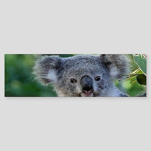 Cute cuddly koala Bumper Sticker