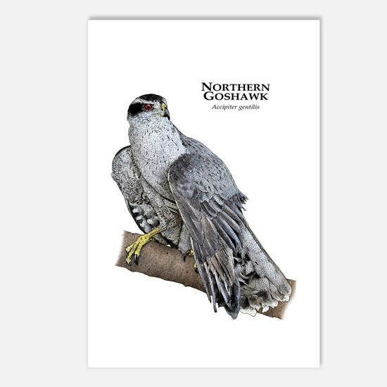 Northern Goshawk Postcards (Package of 8)