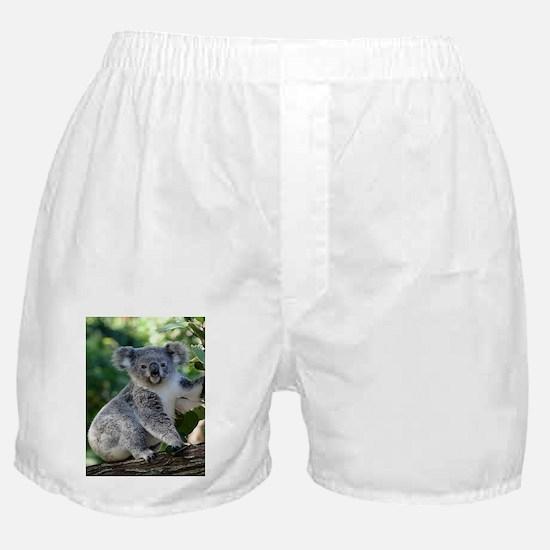 Cute cuddly koala Boxer Shorts