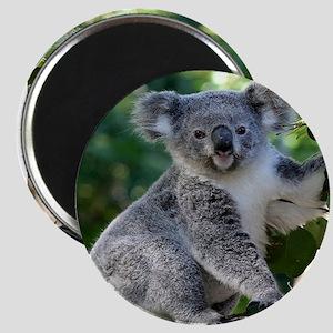 Cute cuddly koala Magnets