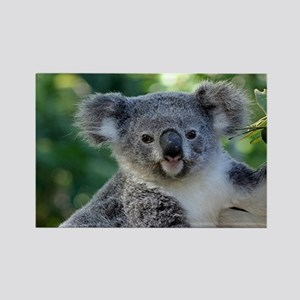 Cute cuddly koala Magnets