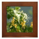 Japanese Honeysuckle Framed Tile
