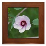 Halberd-leaved Mallow Framed Tile