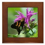 Silver-spotted Skipper Framed Tile