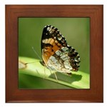 Silvery Checkerspot Underwing Framed Tile