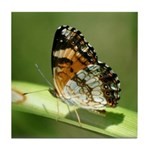 Silvery Checkerspot Underwing Tile Coaster