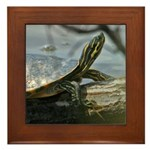 Basking Turtle Framed Tile