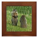 Standing Groundhogs Framed Tile
