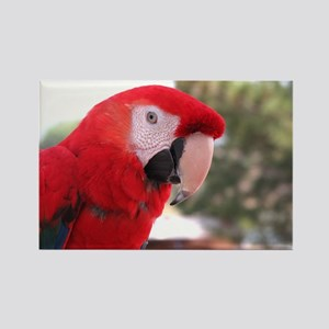 Helaine's Red Parrot (Mccaw) Rectangle Magnet