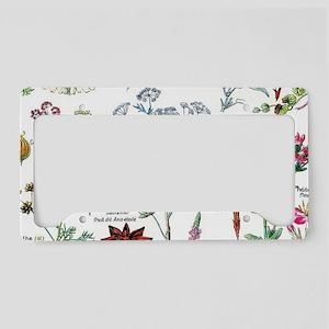 Botanical Illustrations - Lar License Plate Holder