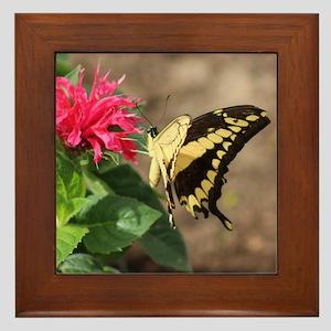 Swallowtail Butterfly Framed Tile