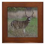 Big 4-point Buck Framed Tile