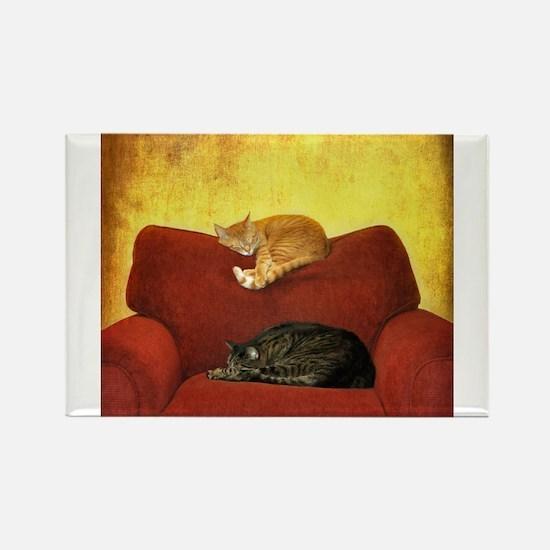 Cats sleeping on sofa. Magnets