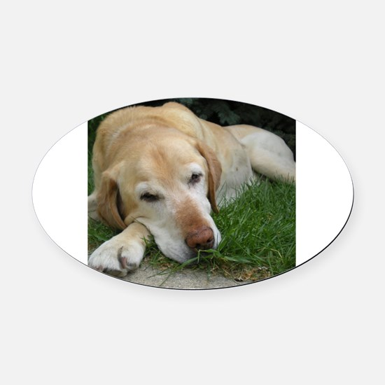 Cool Lab Oval Car Magnet