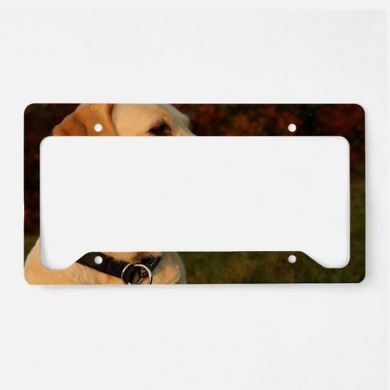 Cute Lab License Plate Holder