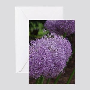 Purple Allium Greeting Cards