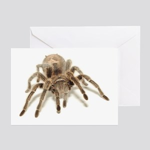 Tarantula Greeting Cards (Pk of 10)