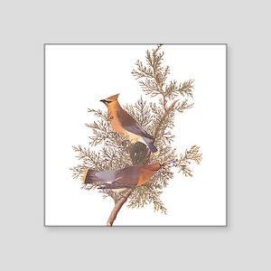 Cedar Waxwing Bird Sticker