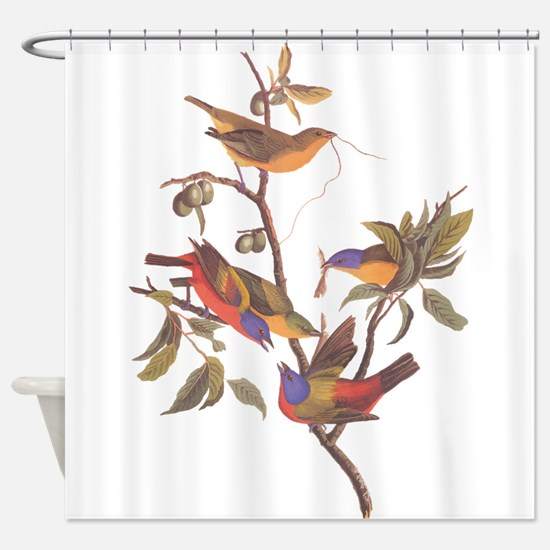 Painted Bunting Birds Vintage Art b Shower Curtain