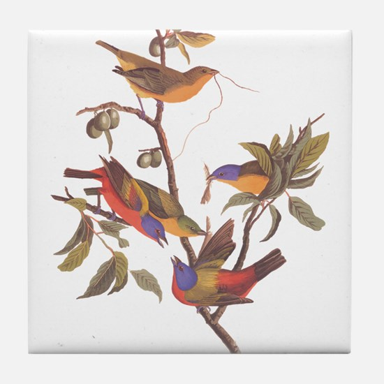 Painted Bunting Birds Vintage Art by Tile Coaster