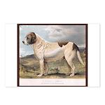 Antique Saint Bernard S Dog Portrait Postcards (8)
