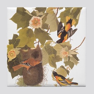 Baltimore Oriole Birds with Nest Audubon Vintage A