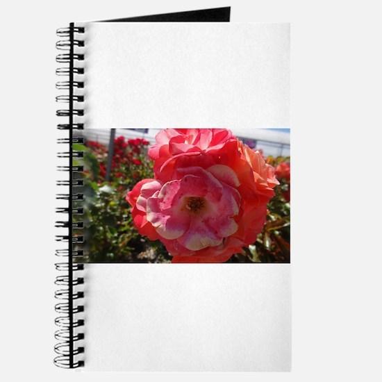 Pink And Orange Flower Journal