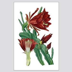 Christmas Cactus Large Poster
