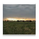 Shippy Rodeo Bulls Tile Coaster
