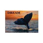 WHALE DREAMS Rectangle Magnet (100 pack)