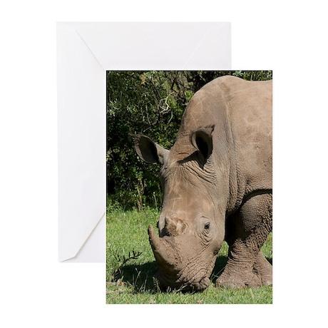 RHINO IN KENYA Greeting Cards (Pk of 20)