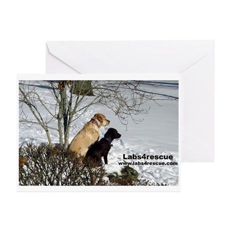 Learning the Ropes Greeting Cards (Pk of 10)