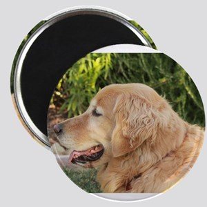 Nala golden retriever profile close up law Magnets